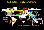 Global ABCA4 study.png