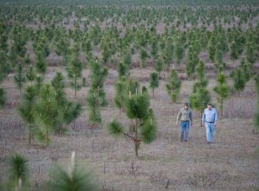 Человек высадил 8 миллионов деревьев