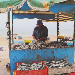 Fisherman in Tagazhout