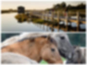Collage_Fotor1-cópia.jpg