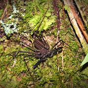 SCORPIO SPIDER.png