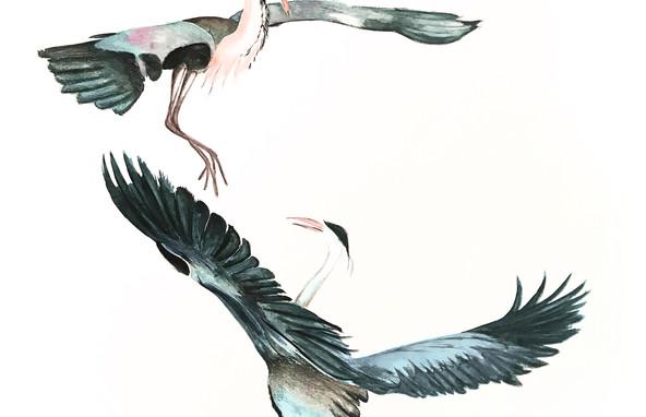 Herons Watercolour Painting