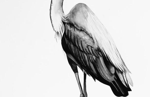 Heron Pose