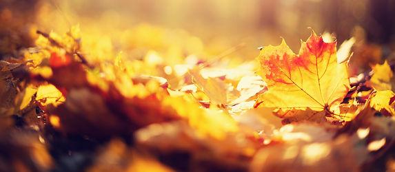 autumn-leaves-background_edited.jpg