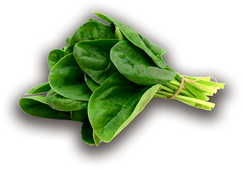 spinach with drop shadow.png