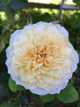 idaho wedding flowers rose