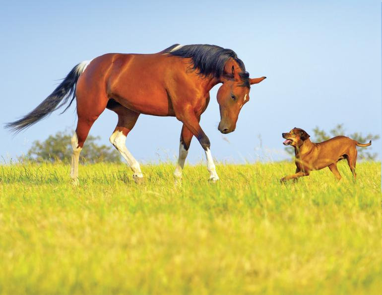Horse & Dog Duo Treatments