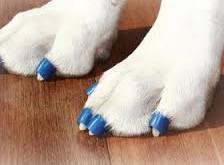 Slip and Slide for Dogs