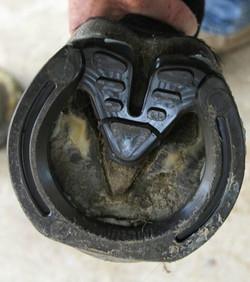 Imprint sports shoeing