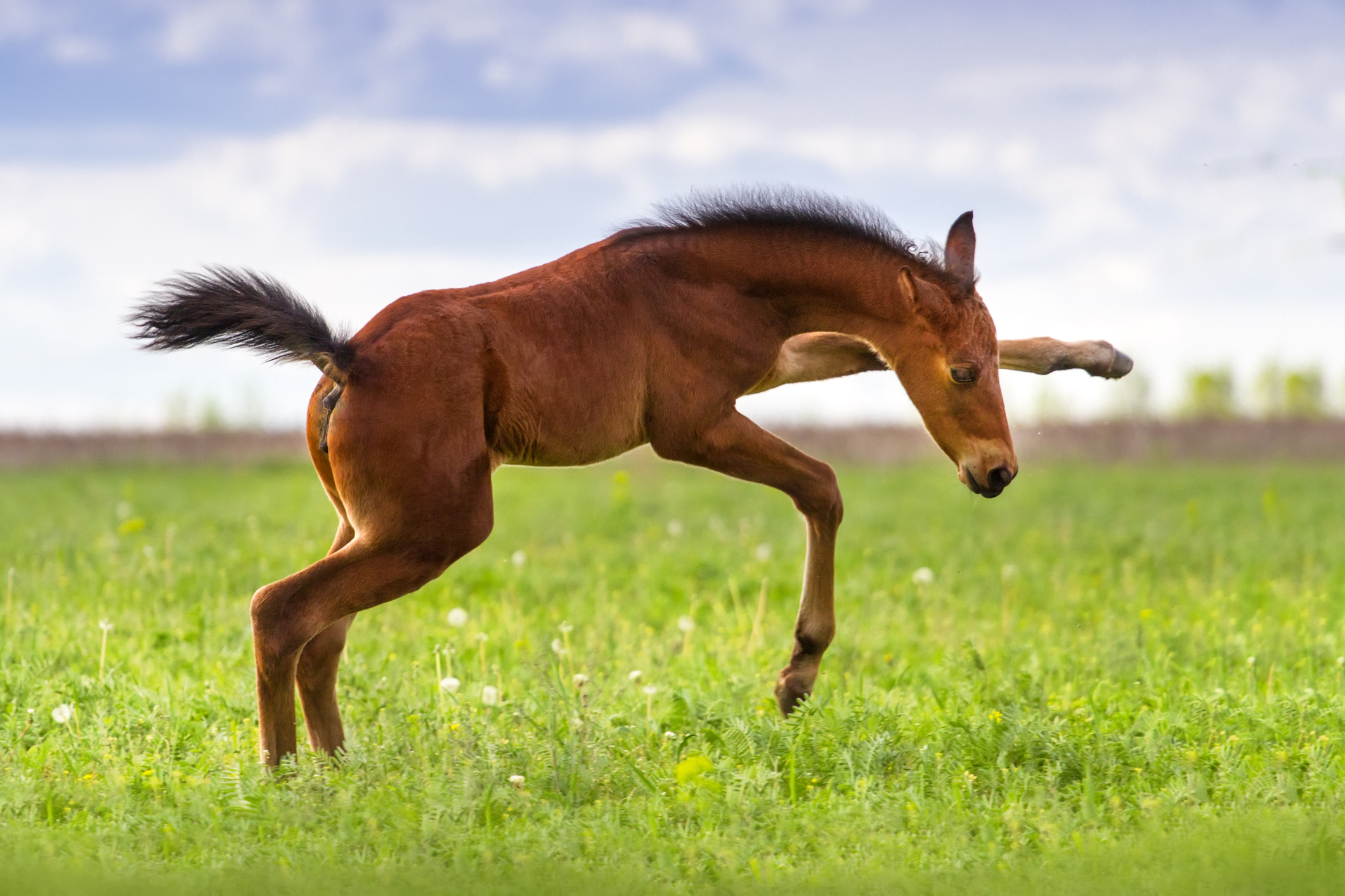 Playing foal