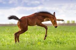 Playing foal