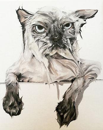 gato (1).jpg