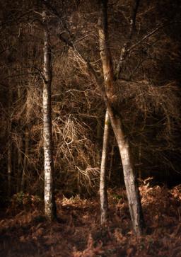 Blackpool Wood 3