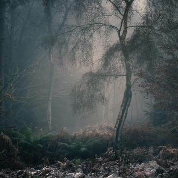 Blackpool Wood 2