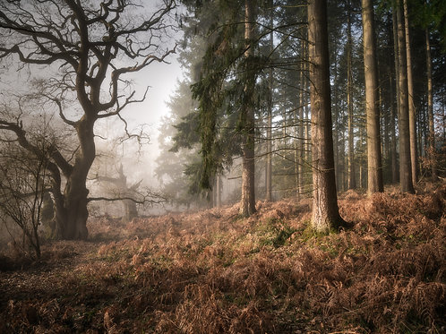 Frontiers, Mortimer Forest