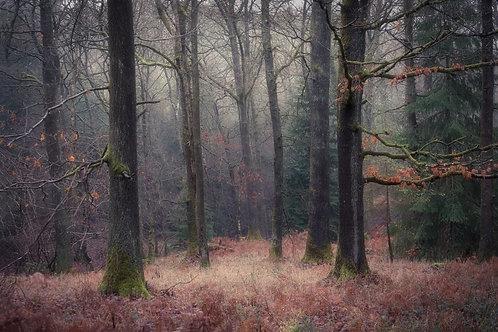 Soft Finish, Mortimer Forest