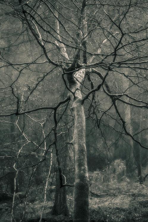 Mycelium, Mortimer Forest