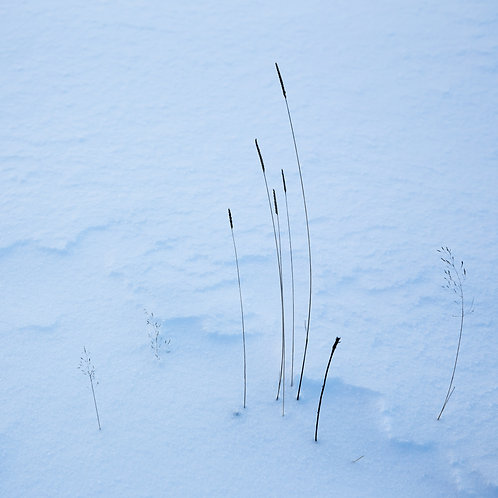 Clee Snow Abstract 1