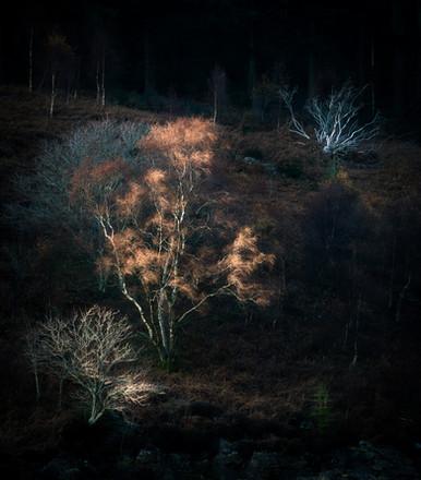 Elan Tree Sunset