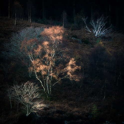 Forest Fire - Elan Valley