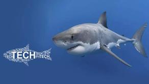 O tubarão acordou: a Advent vai para cima das empresas de tech e startups