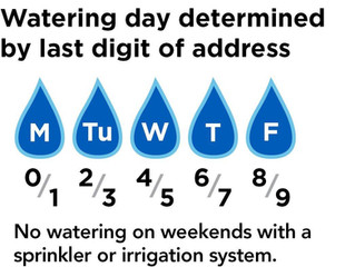 Stage 2 Water Restrictions- How to get the most of your watering allotment