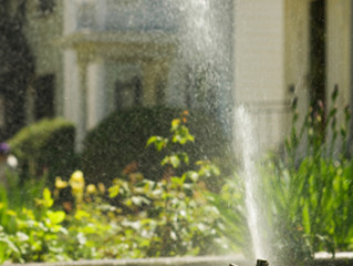 Watering Instructions- How Much Should I Water???