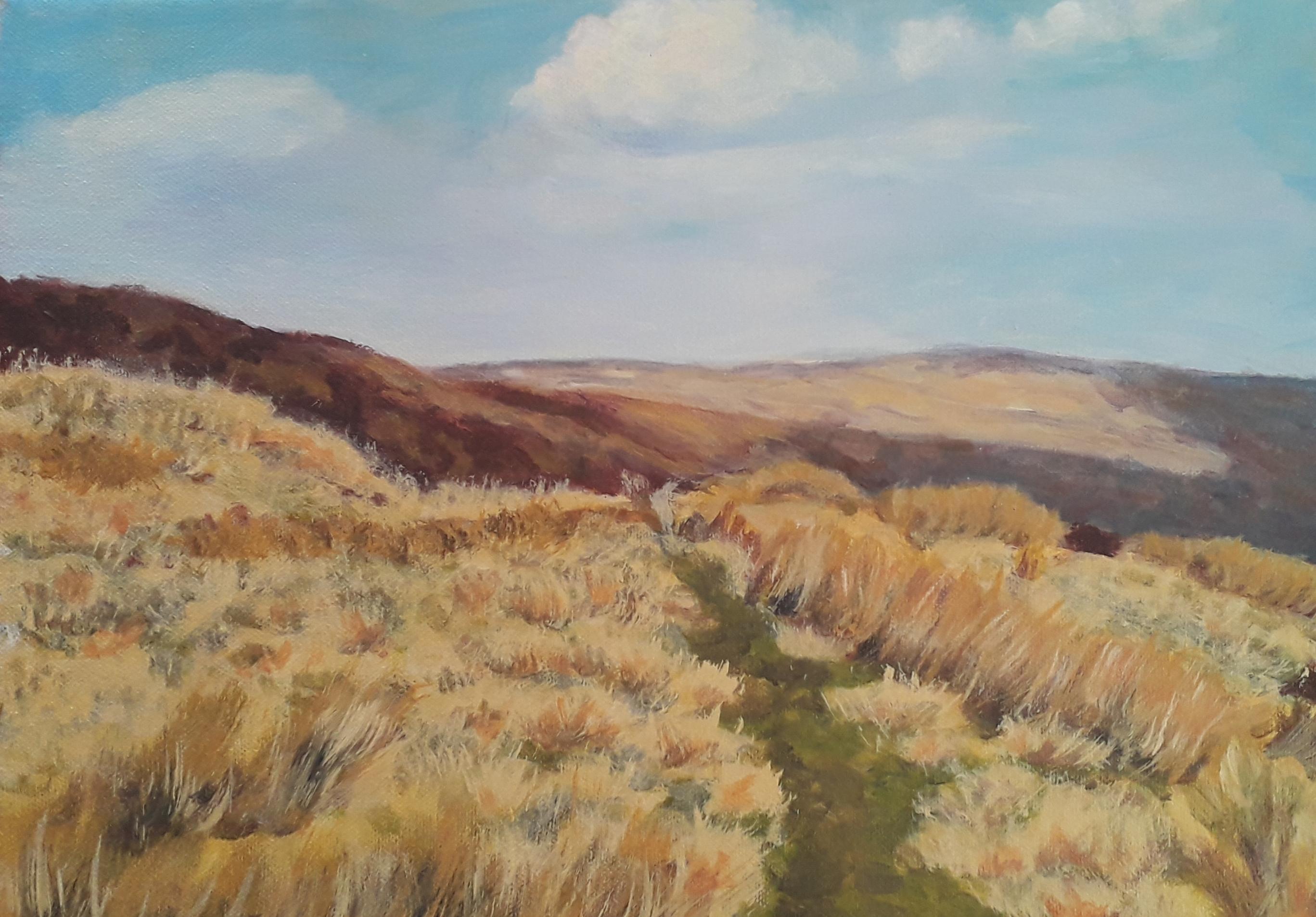 Midgeley Moor