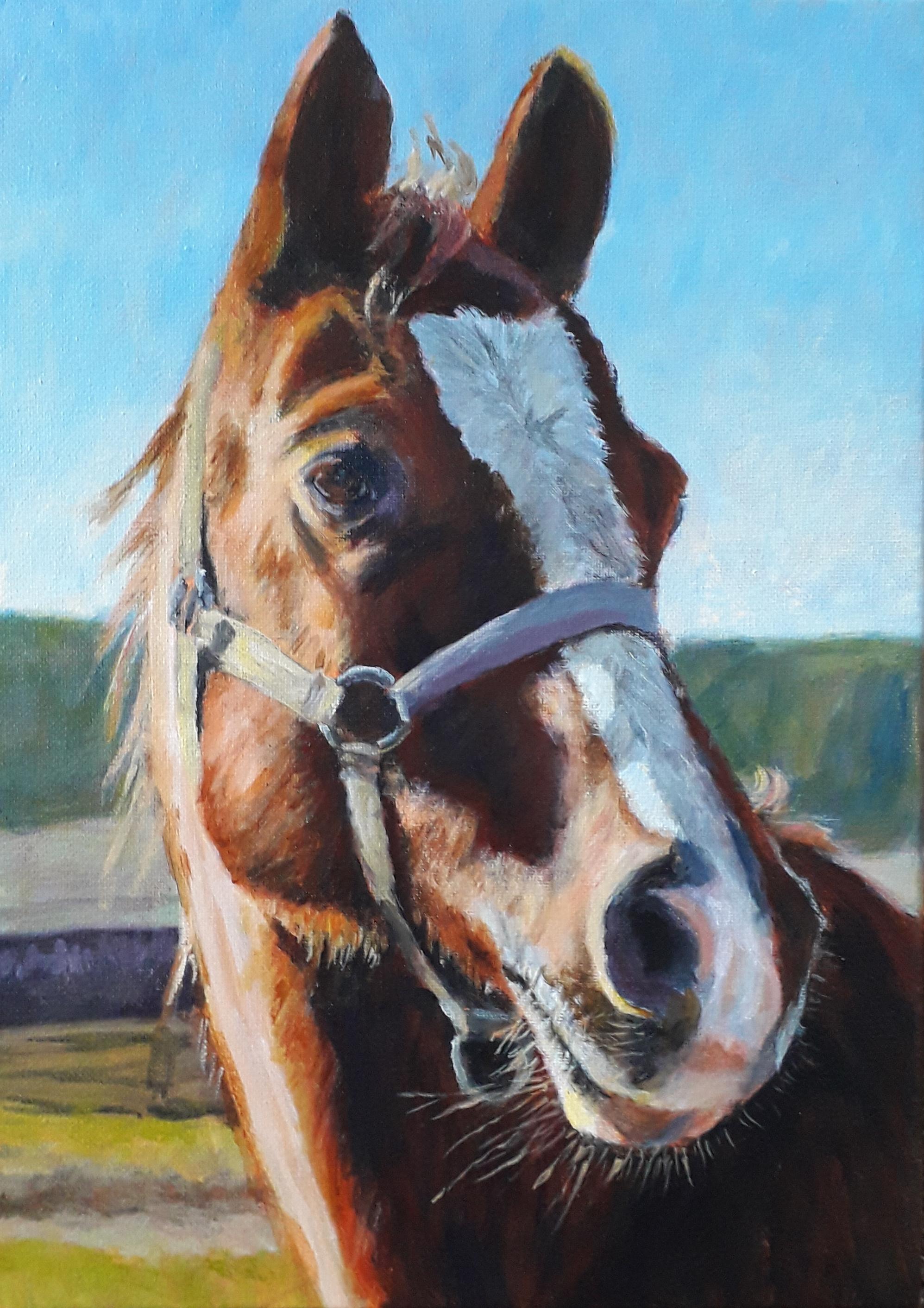 Horse for Nikx