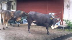 葉天澈_愛吃紙皮的牛