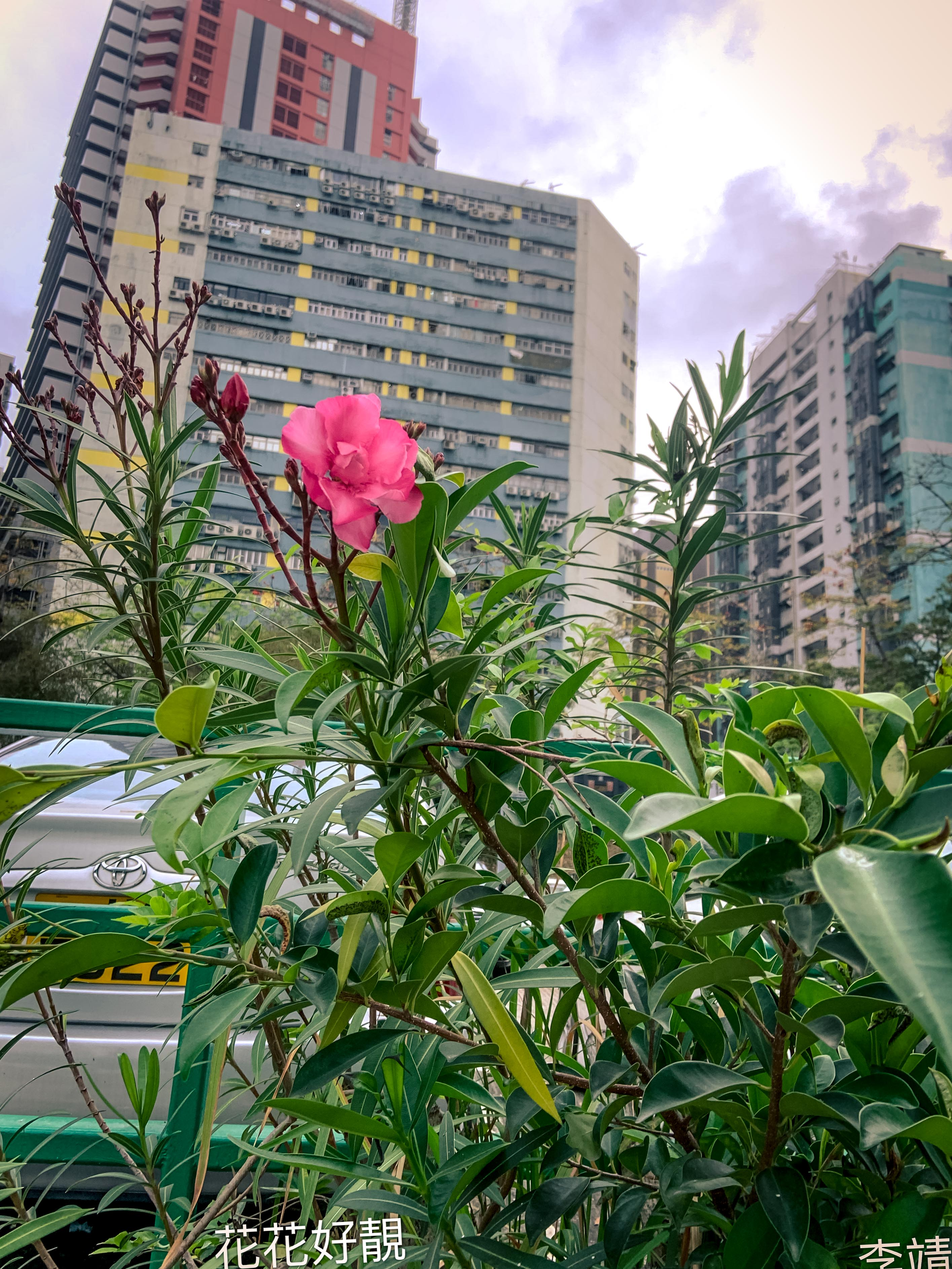 李靖怡_路邊的花
