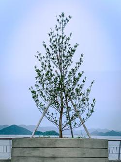 鄺子豐_團結︰三根竹竿就像三個人合力支撐着植物