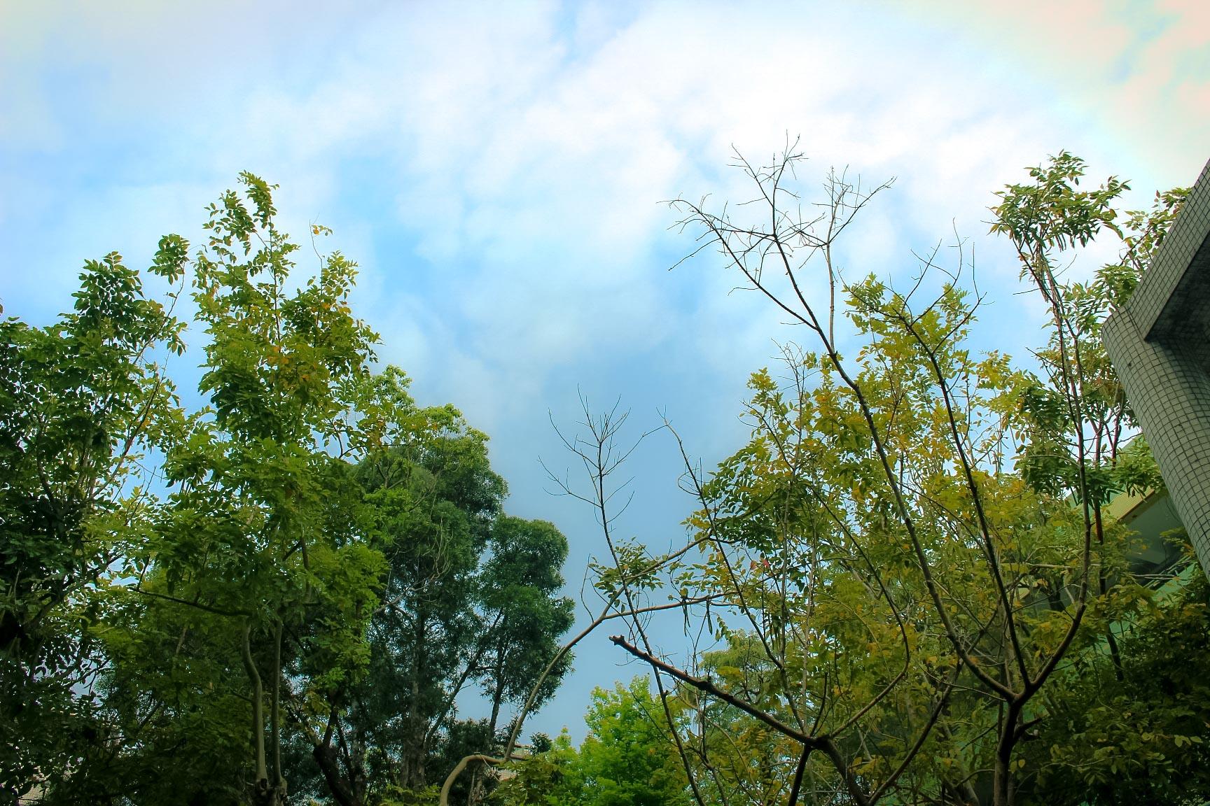 高宸祤_天空與樹