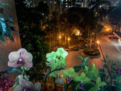 賴穎妍_晚上的天空和美麗的花, 互相襯托, 美麗極了!