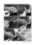 Screen Shot 2019-01-01 at 2.26.05 PM.png
