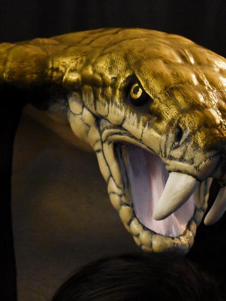 Detail: Main Cobra