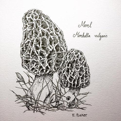 Print | Morel Fungus
