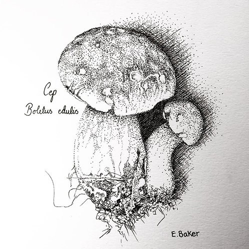 Print | Cep Fungus