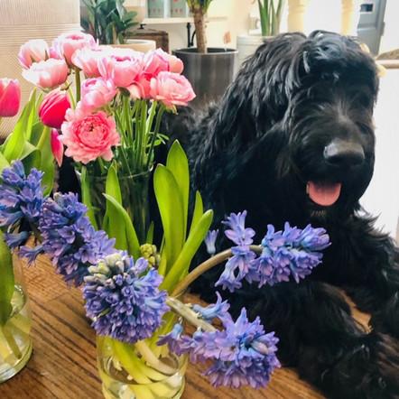 Frankie and Spring Flowers (1).JPG