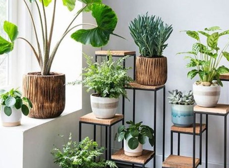 Houseplants Improve Your Health!