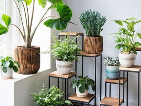 Houseplants Improve Your Health!