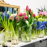 Tulips Calgary Flowers.JPG