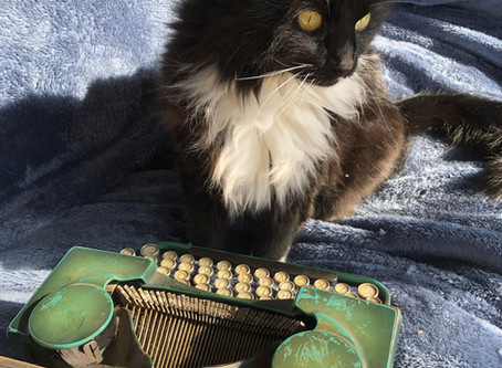 The HSP Typing Cat - a highly sensitive soul