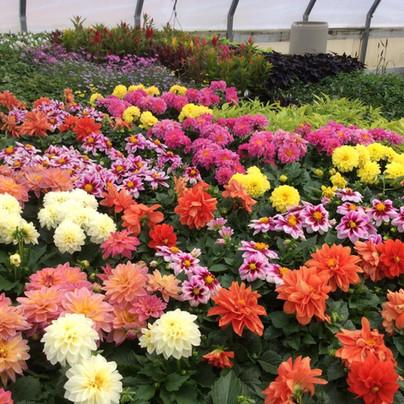 Plants & Decor.jpg