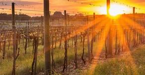 Vinhos e Vinhedos Dunamis