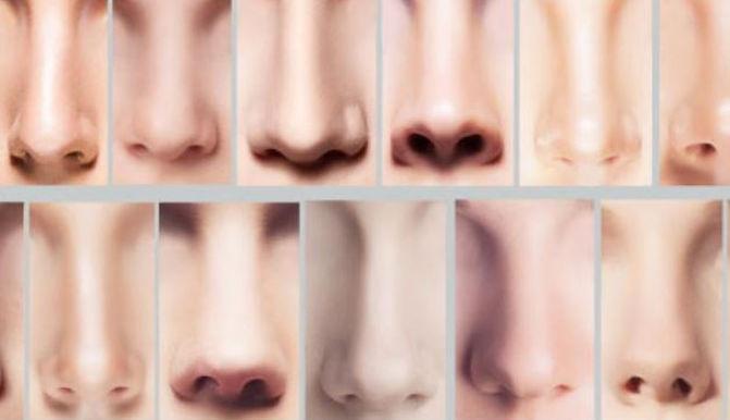 Der Ausdruck der Nase
