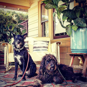 #porchlife #furiends #northpark #dogs #p