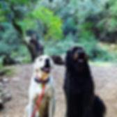 Furiends Furever 👫  #dogfriends #dognat