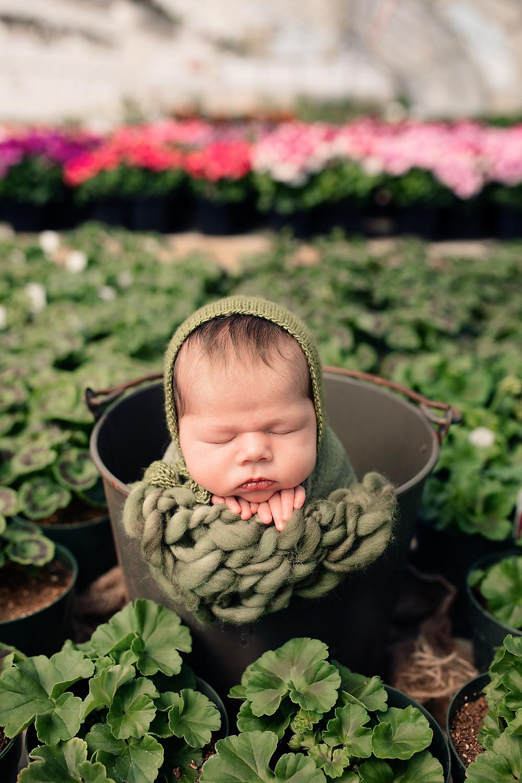 newborn baby girl greenhouse session