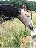 Répulsifs, antiparasitaires, chevaux, poneyx, shampoings, anti dermatose, régul' gale, actifs naturels, officinalis